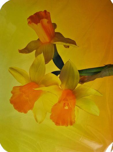 Prostíraní Narcis sada 4ks